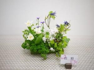 lsn-180403 吉野